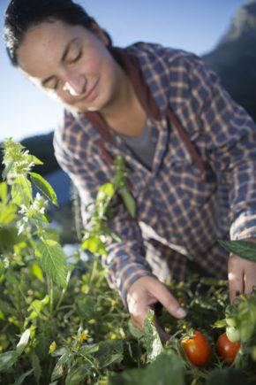 Cécile ANDRIEUX a perché sa ferme à 1650m d'altitude, à Villard Reymond. Elle expérimente le maraîchage d'altitude, vend ses légumes tout l'été et transforme légumes et cueillettes sauvages en condiments originaux pour le reste de l'année